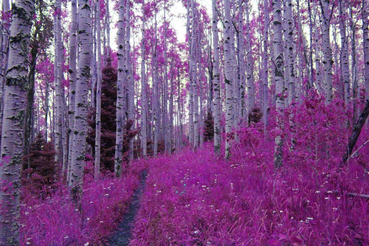 purpletrees