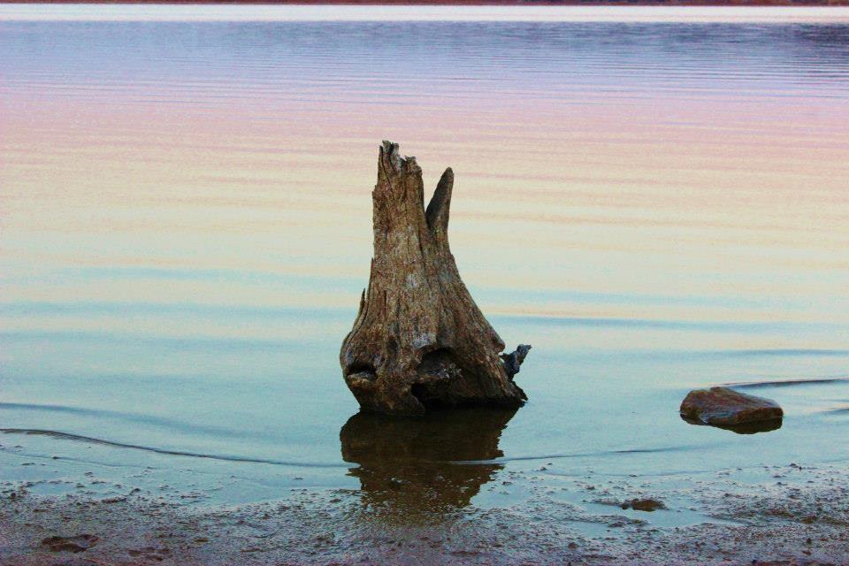 stumpinwater