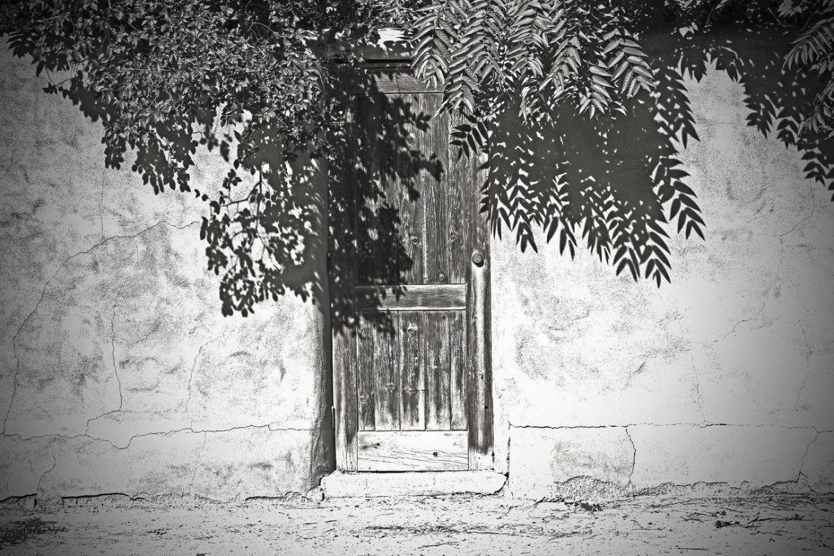 treeoverdoor